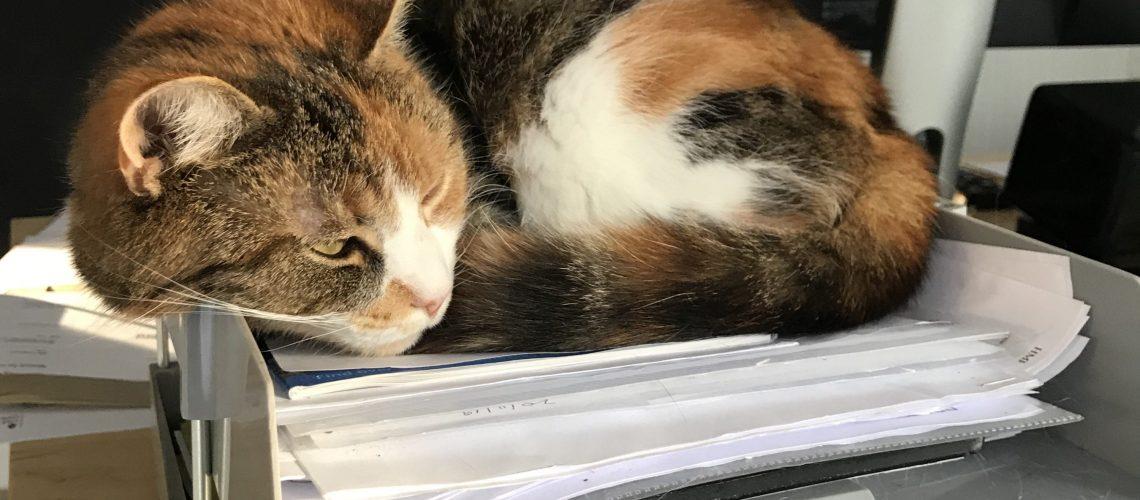 news filing cat